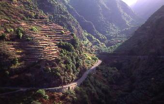 The Los Tilos ravine